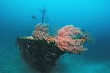 Halaveli Wreck and a Scuba Diver, Maldives. Reproduction photographique par Reinhard Dirscherl