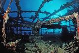 Scuba Diver Diving on Umbria Shipwreck, Sudan, Africa, Red Sea, Wingate Reef Reproduction photographique par Reinhard Dirscherl