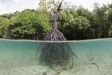 Split Image of a Large Mangrove and its Extensive Prop Root System Photographic Print by Reinhard Dirscherl