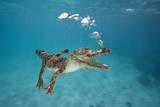 Saltwater Crocodile (Crocodylus Porosus), Queensland, Australia Fotografisk tryk af Reinhard Dirscherl