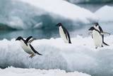 Adelie Penguins Diving off Ice Photographic Print by Joe McDonald