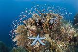 Colorful Coral Reef, Alam Batu, Bali, Indonesia Photographic Print by Reinhard Dirscherl