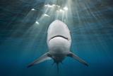 Blacktip Shark (Carcharhinus Limbatus) Photographic Print by Reinhard Dirscherl