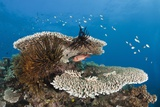 Coral Reef Photographic Print by Reinhard Dirscherl