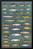 Fresh Water Game Fish Prints