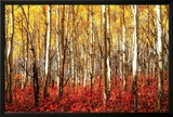 Aspen Grove - Red Photo