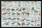 Mammal Evolution Posters