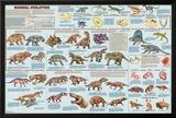 Mammal Evolution Posters