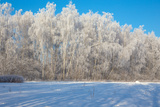 Winter Birch Photographic Print by  Atuan