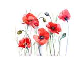 Poppy Posters by  okalinichenko