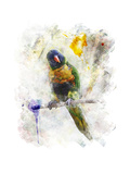 Watercolor Image of Parrot (Rainbow Lorikeet) Stampe di  SunnyS