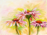 Echinacea, Oil Painting Prints by  Valenty