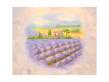 Fields of the Blossoming Lavender in Provence. A List on a Room Prints by  vodolej