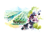 Vineyards Print by  okalinichenko