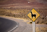 Alpaca Road Sign Photographic Print by  berzina