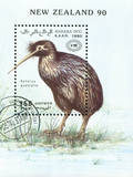 Kiwi Bird Photographic Print by  rook76