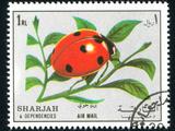 Ladybug Photographic Print by  rook76