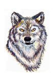 Oil Painting Wolf Head Posters by  jim80