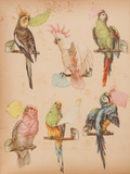 Vintage Parrot Scrap Book Stickers Stampe di Chris Brignell