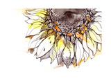 Sunflower Kunst av  okalinichenko