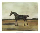 """Trentham,"" A Bay Colt Giclee Print by Naomi McCavitt"