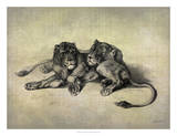 Big Cats III Giclee Print by John Butler