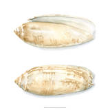 Watercolor Shells V Giclee Print by Megan Meagher