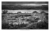 Views of Ireland VII Giclee Print by Richard James