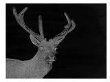 Charcoal Deer, Urban Road Art