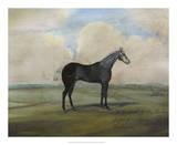 """The Kicker,"" A Steel Grey Racehorse Giclee Print by Naomi McCavitt"
