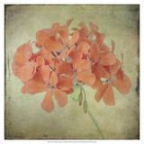 Lush Vintage Florals IX Prints by Honey Malek