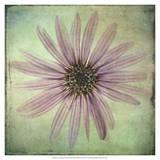 Lush Vintage Florals VIII Prints by Honey Malek