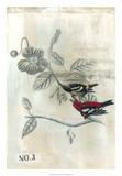 After Flight III Giclee Print by Naomi McCavitt