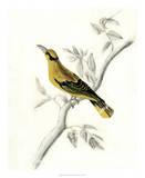 Rustic Aviary II Giclee Print by Naomi McCavitt