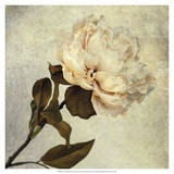 Lush Vintage Florals II Prints by Honey Malek