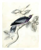 Rustic Aviary I Giclee Print by Naomi McCavitt