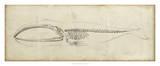 Whale Study I Giclee Print by Ethan Harper