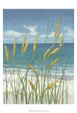Summer Breeze II Art by Tim O'toole