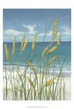 Summer Breeze II Prints by Tim