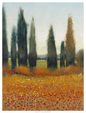 Cypress Trees I Prints by Tim