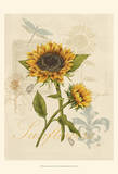 Romantic Sunflower II Posters by Jade Reynolds