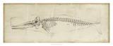 Whale Study II Giclée-tryk af Ethan Harper