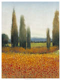 Cypress Trees II Posters by Tim