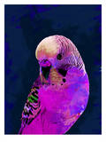 Abstract Budgie Pink, Urban Road Stampe