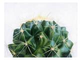 Cacti, Urban Road Posters