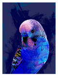 Abstract Budgie Blue, Urban Road Stampe