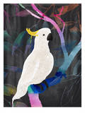 Cockatoo Rainbow, Urban Road Affiches