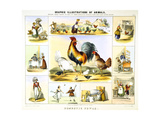 Domestic Fowl, C1850 Giclee Print by Benjamin Waterhouse Hawkins