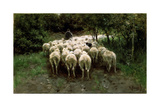 Sheep in the Forest, 19th Century Giclee Print by Anton Mauve