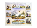 The Swan, Goose and Duck, C1850 Giclee Print by Benjamin Waterhouse Hawkins
